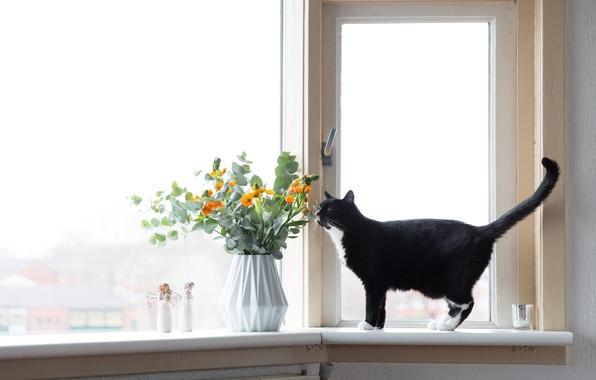 Picture cat, flowers, window