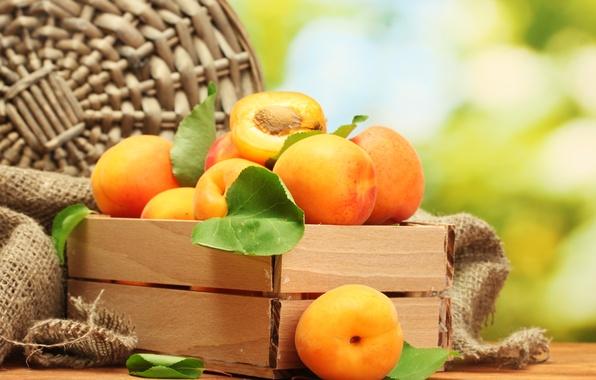 Picture fruit, apricots, apricot
