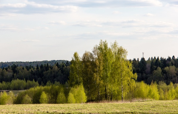 Picture greens, forest, trees, spring, morning, may, green, Sunny