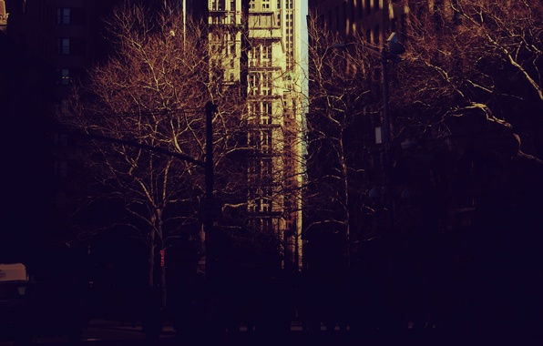 Picture trees, city, the city, Park, mood, new York, new york, the Wallpapers, pictures for your …