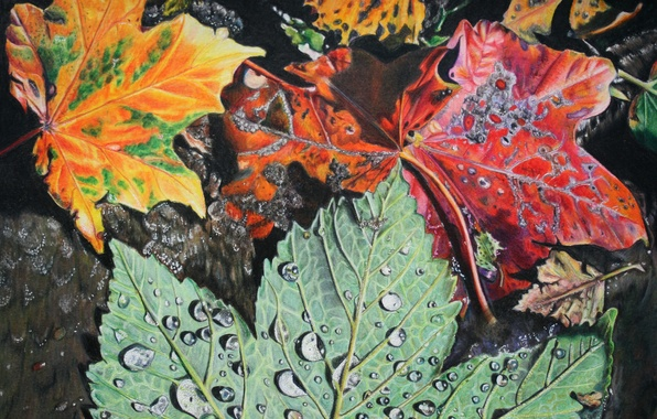 Picture leaves, drops, foliage, Autumn, painting