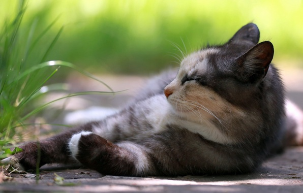 Picture cat, grass, stay
