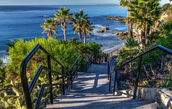 Picture sea, stones, palm trees, coast, the descent, horizon, CA, ladder, steps, USA, Laguna Beach