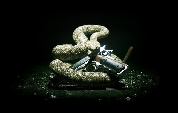 Picture style, gun, snake, hitman, Hitman 5, Silver baller, hitman 5, absolution, Hitman