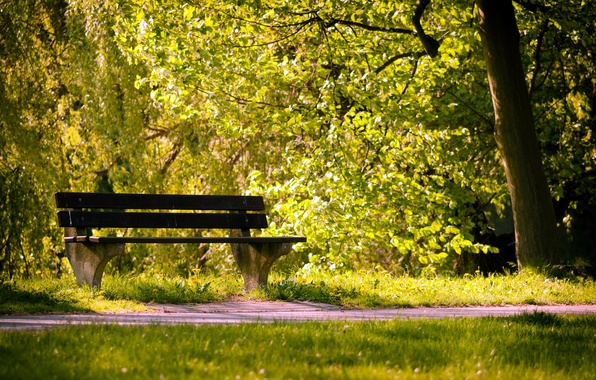 Picture summer, Park, bench