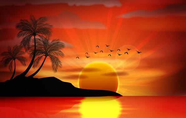 Picture sea, sunset, birds, palm trees, vector, island, silhouette, sea, sunset, island, paradise, palms, tropical