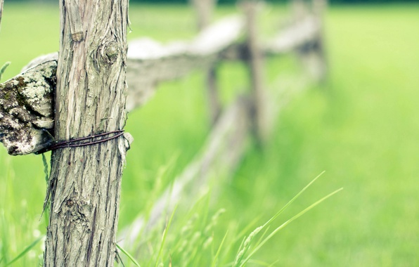 Picture field, summer, grass, tree, the fence, wire, field, fence, fence