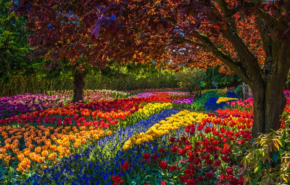 Picture trees, flowers, Park, spring, garden