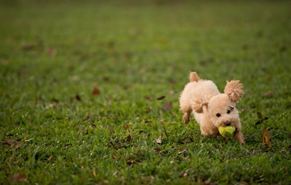 Picture grass, lawn, the game, the ball, dog, fluffy
