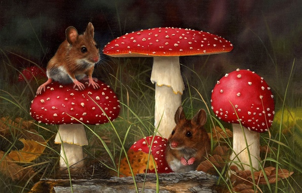 Picture forest, grass, mushroom, mushroom, mouse, art, CARL ANDREW WHITFIELD