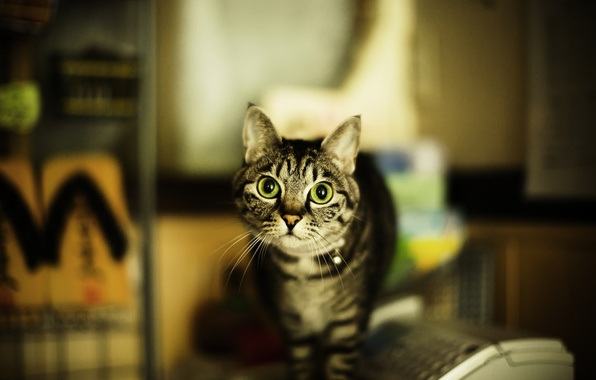 Picture cat, eyes, cat, mustache, blur, green, grey, striped