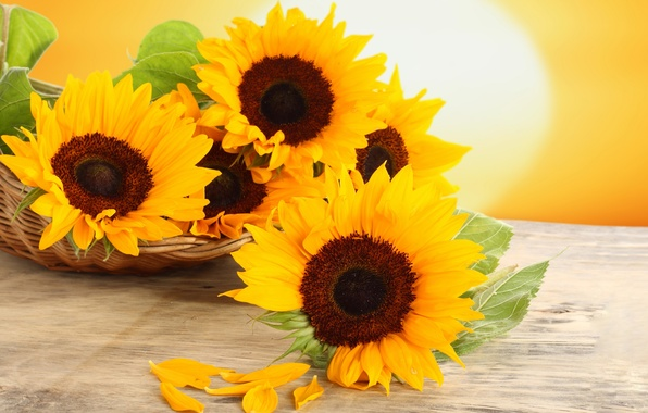 Picture sunflowers, flowers, table, basket, yellow, petals