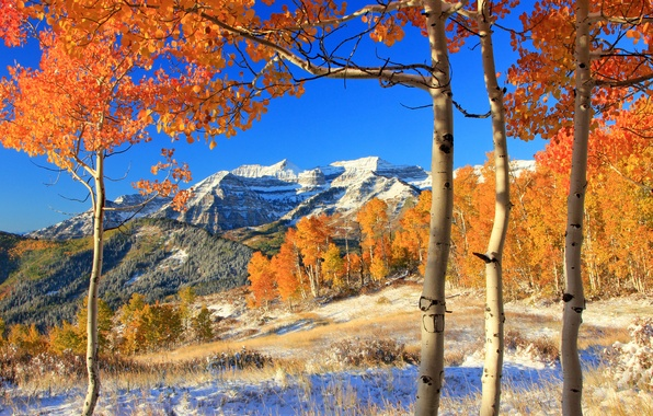 Picture autumn, forest, leaves, snow, trees, mountains, yellow