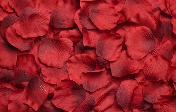 Picture flowers, petals, red, a lot