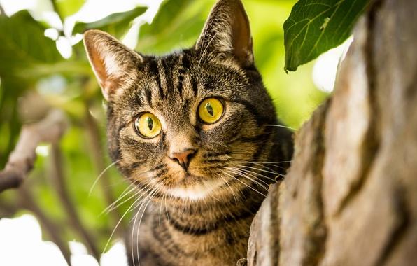 Picture cat, cat, look, muzzle, eyes