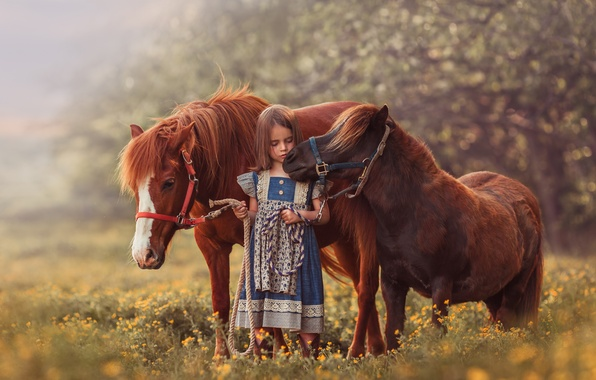 Picture summer, girl, pony