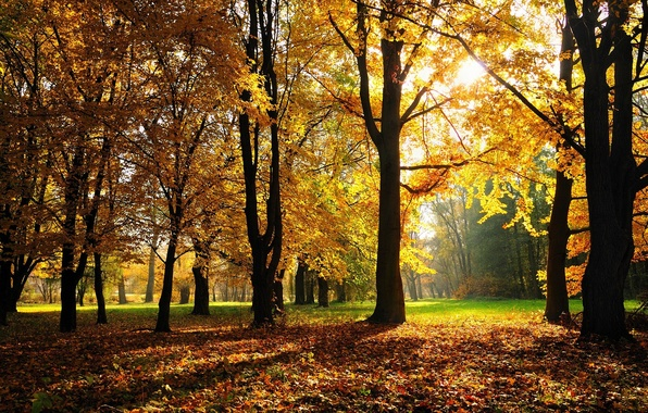 Picture autumn, forest, grass, trees, Park, foliage