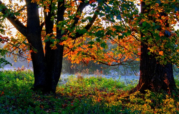 Picture autumn, forest, grass, trees, foliage