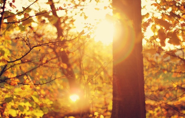 Picture leaves, the sun, macro, rays, trees, branches, glare, background, tree, widescreen, Wallpaper, foliage, day, wallpaper, …