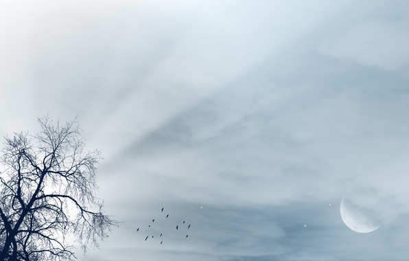 Picture the sky, rays, light, landscape, birds, tree, the moon, moon, tree, luna, birds, rays