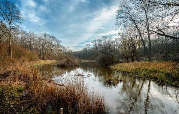 Picture nature, river, spring