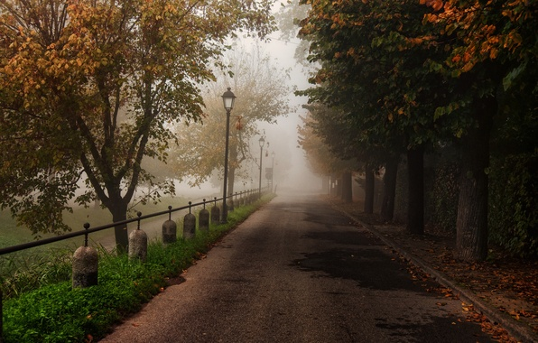 Picture road, autumn, trees, nature, Park, foliage, fence, Sergio Locatelli рhotography