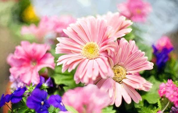 wallpaper flowers blue violet light garden bokeh