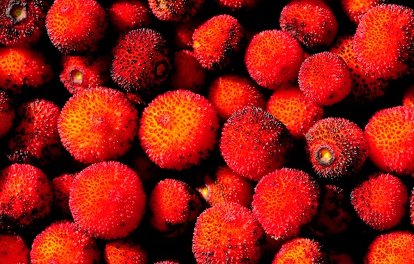 Picture fruit, seeded drupe, strawberry tree, arbutus