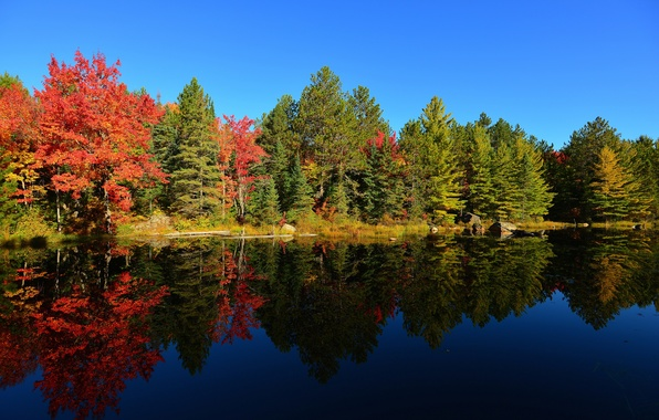 Picture autumn, forest, the sky, trees, sunset, lake, pond