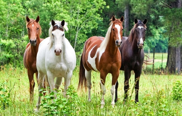 Picture forest, animals, grass, trees, nature, horse, stallion, horses, horse, beautiful, stallions, horses, horse