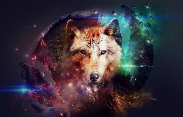 Picture abstraction, animal, collage, wolf, beautiful pictures