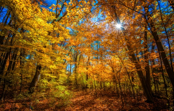 Picture autumn, forest, the sun, rays, trees, color, bright