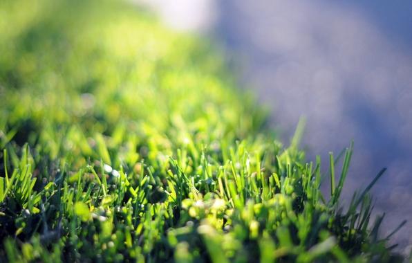 Picture greens, flower, grass, macro, flowers, green, background, pink, widescreen, Wallpaper, petals, meadow, wallpaper, flower, widescreen, …