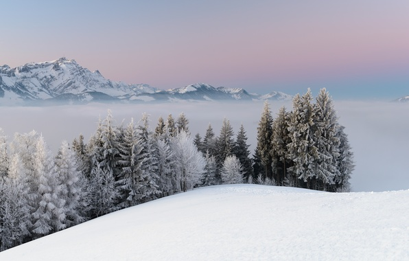 Photo wallpaper winter, snow, mountains, nature, fog, trees, landscape