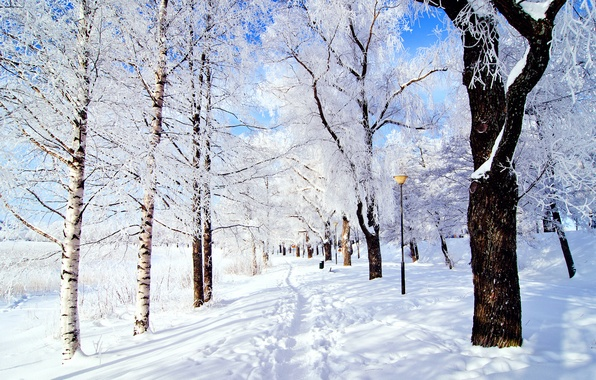 Picture winter, frost, the sky, snow, trees, nature, Park