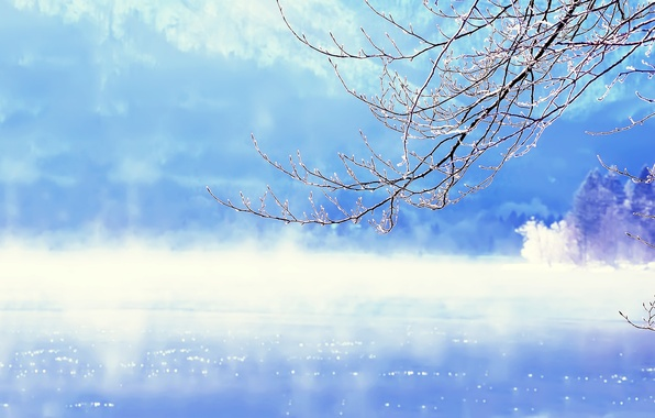 Picture winter, water, snow, branches, lake, tree, Slovenia, Slovenia, Lake Bohinj