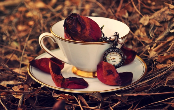 Picture autumn, grass, leaves, watch, rose, petals, Cup, red, saucer