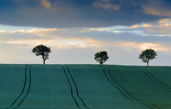 Picture field, the sky, clouds, trees, hills