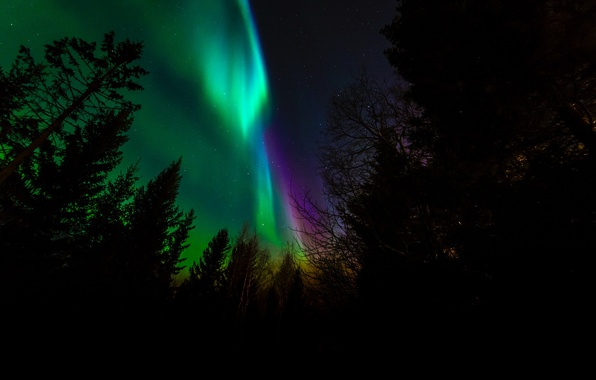 Picture trees, night, Northern lights, silhouette, Norway