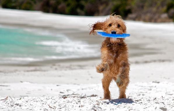 Picture sea, beach, background, each, widescreen, Wallpaper, the game, dog, wet, play, wallpaper, wet, beach, sea, …