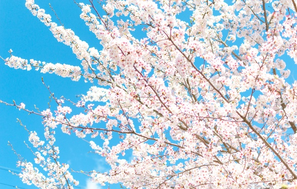 Picture the sky, flowers, branches, spring, petals, garden