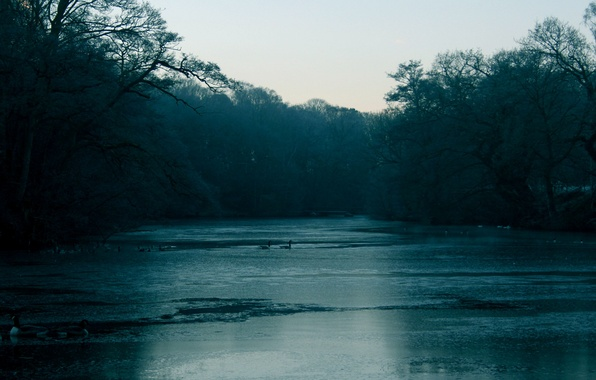 Picture cold, autumn, forest, water, trees, birds, branches, fog, river