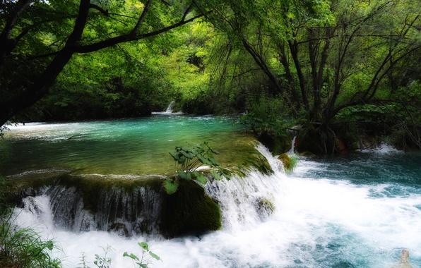 Picture forest, trees, river, stream, Croatia, thresholds, Croatia