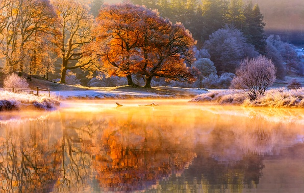 Picture frost, autumn, light, trees, nature, river, morning, couples, November