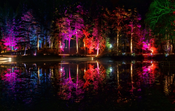Picture trees, night, lights, pond, Park, color