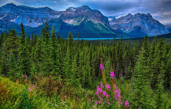 Picture forest, mountains, Canada, Albert, Alberta, Canada, Jasper National Park, Rocky mountains, Jasper national Park, Canadian …