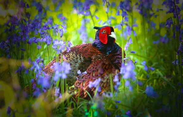 Picture flowers, bird, bells, pheasant