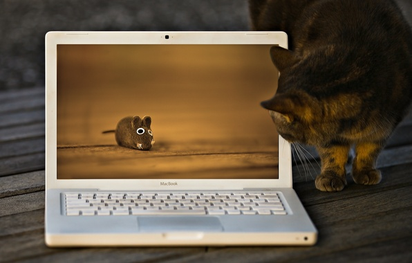 Picture cat, cat, toy, mouse, macbook