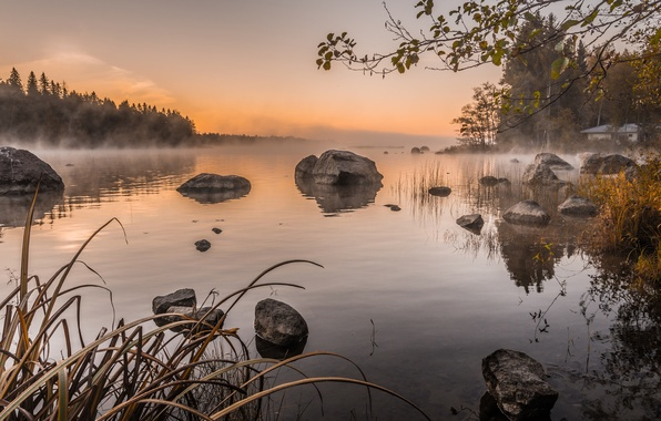 Picture the sky, trees, fog, lake, stones, morning