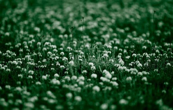 Photo wallpaper summer, grass, greens, clover, plants